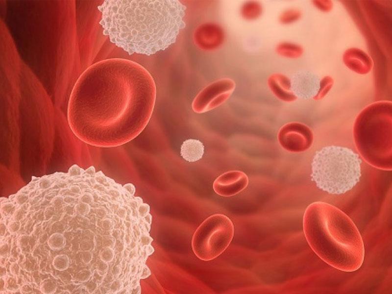 Chanh giúp sản sinh tế bào bạch cầu