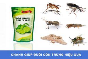 Đuổi côn trùng là một trong những Lợi ích của bột chanh